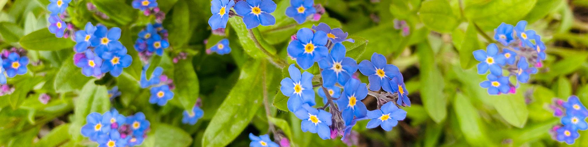 slider-blaue-blume